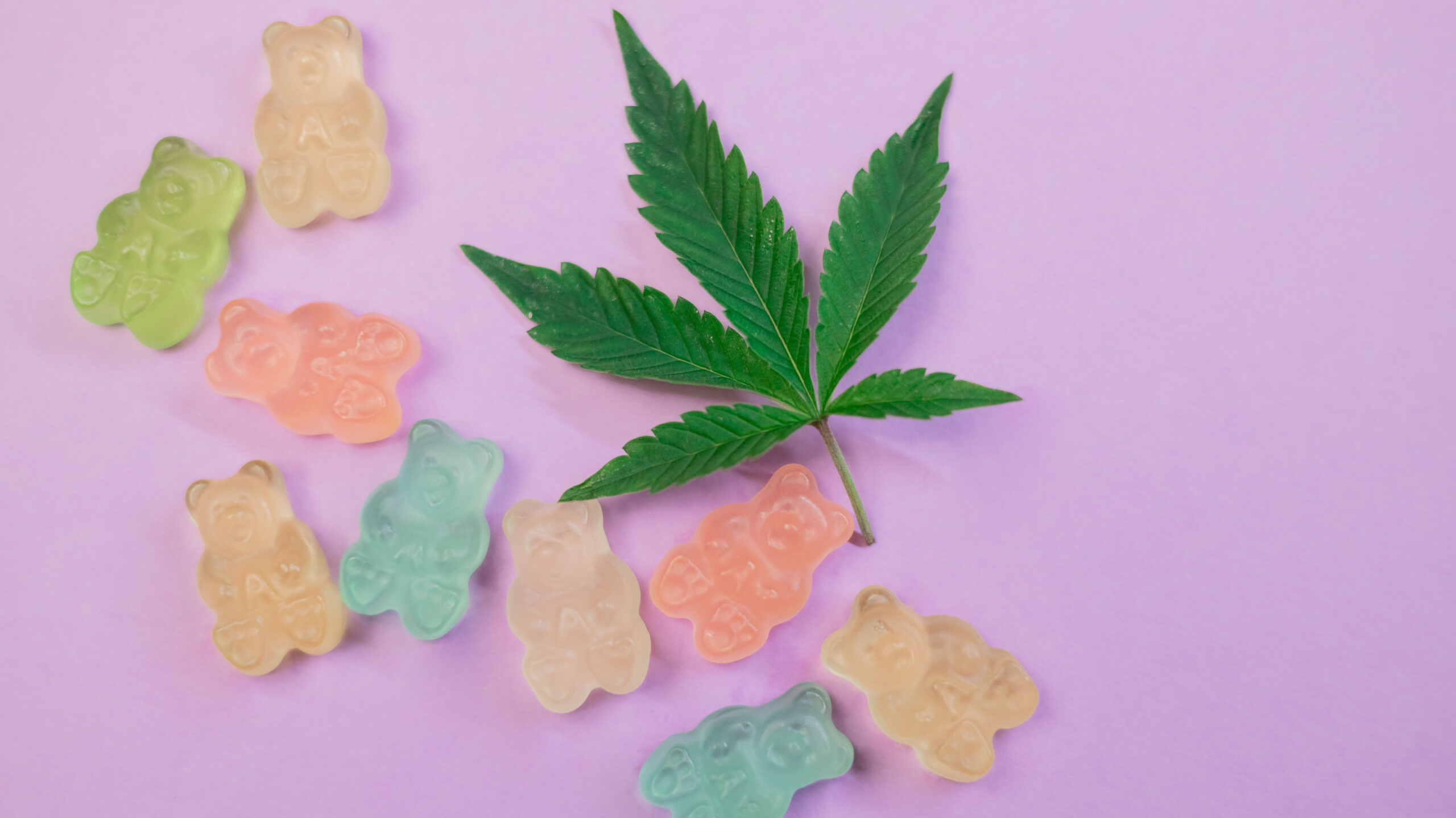 Multiple colours of gummy bears lay next to cannabis leaf on a lavender coloured background.